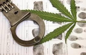 fbi marijuana