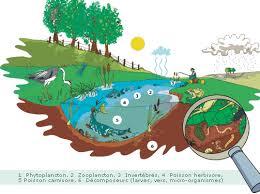 Alerte : Le projet de loi sur la biodiversité organise la destruction de la nature… BIODIVERSIT%C3%89