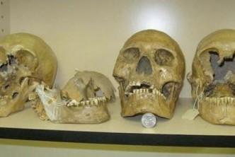 ob_cac6d3_skull-giant-460x307