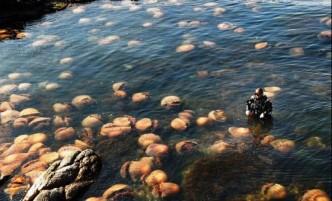 123ocean-méduses2-jpg