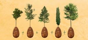 sacred-memory-forest-biodegradable-burial-pod-capsula-mundi-thumb640-640x290
