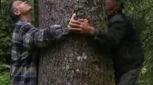 cueilleur d'arbre