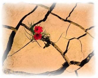 fleur desert