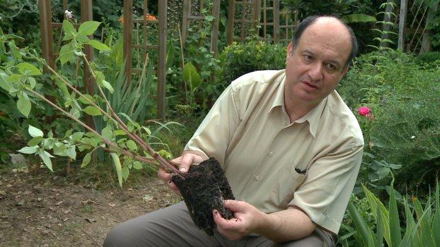 l homme qui faisait pousser les plantes sans eau. Black Bedroom Furniture Sets. Home Design Ideas