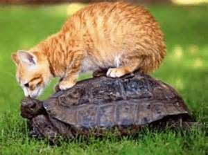 chat et tortue