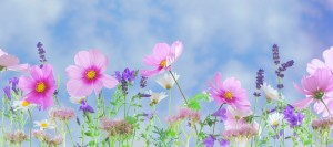 wild-flowers-flowers-plant-macro-nature