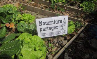 incroyables-comestibles-potagers-urbains-legumes-gratuits-7-1