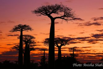 baobab-alley20-watermarked