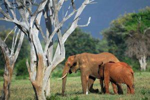 elephants-afrique