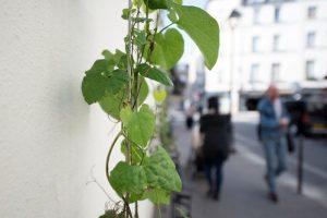 permis-vegetaliser-paris-6