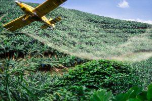 La culture de la banane par la PHP (Plantations du Haut-Penja) au Cameroun. Epandage de foncigicides par avion.