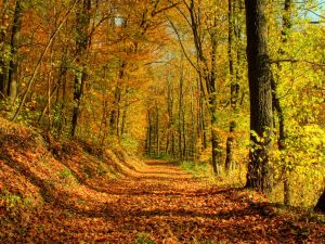autumn_leaves_trees-_autumn_landscape_wallpaper_1024x768