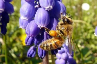 abeille-2-ok